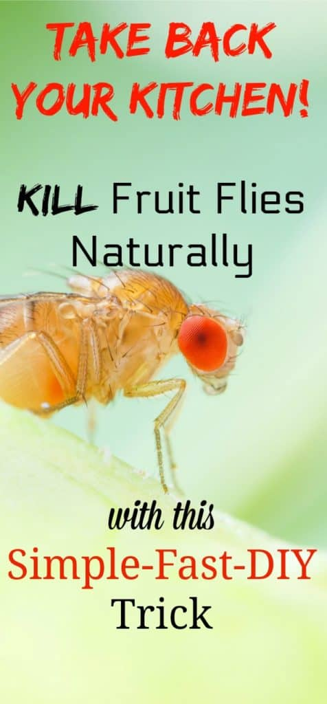 How to Get Rid of Fruit Flies Quickly DIY