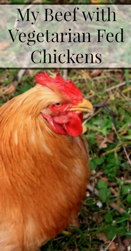 Vegetarian Fed Chickens pin